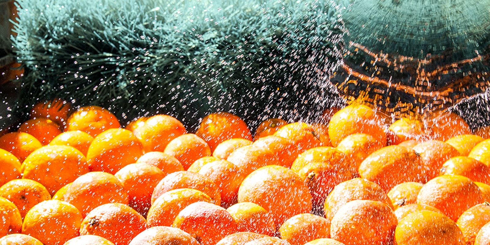 Oranges Getting Washed